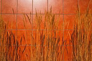 Ornamental Grass by quintmckown