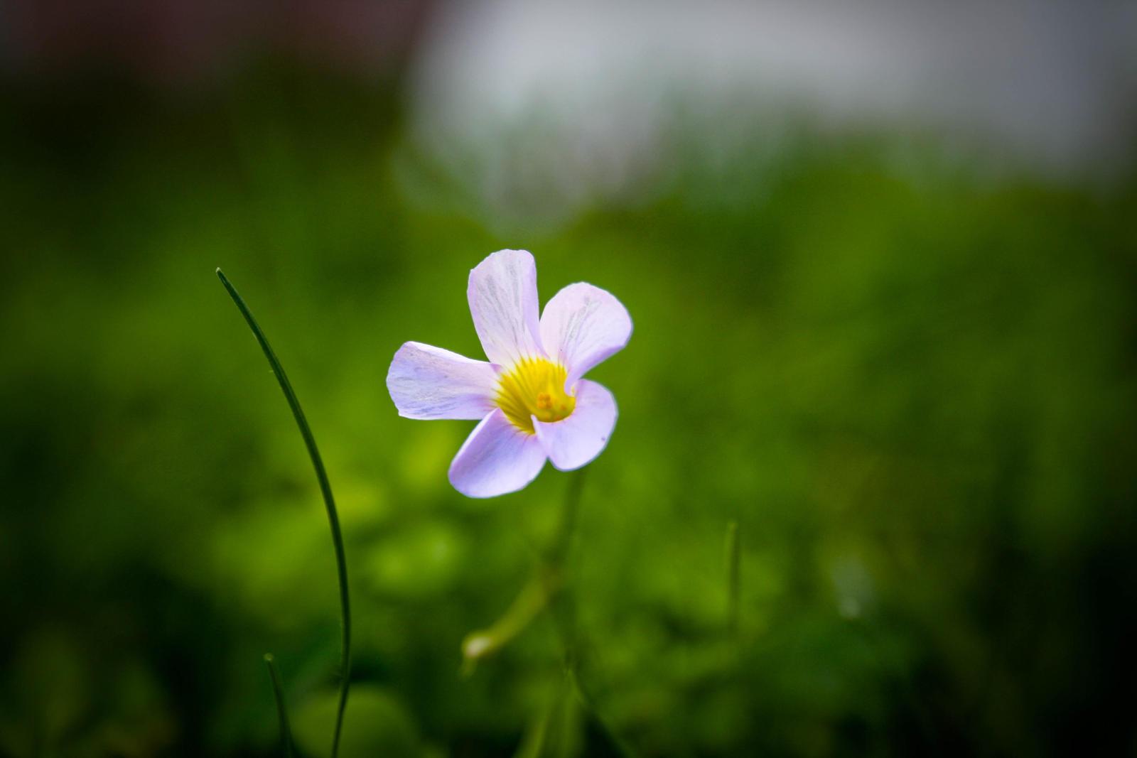 Little Flower by ystermyt on deviantART