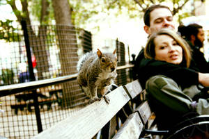 The Friendly Squirrel