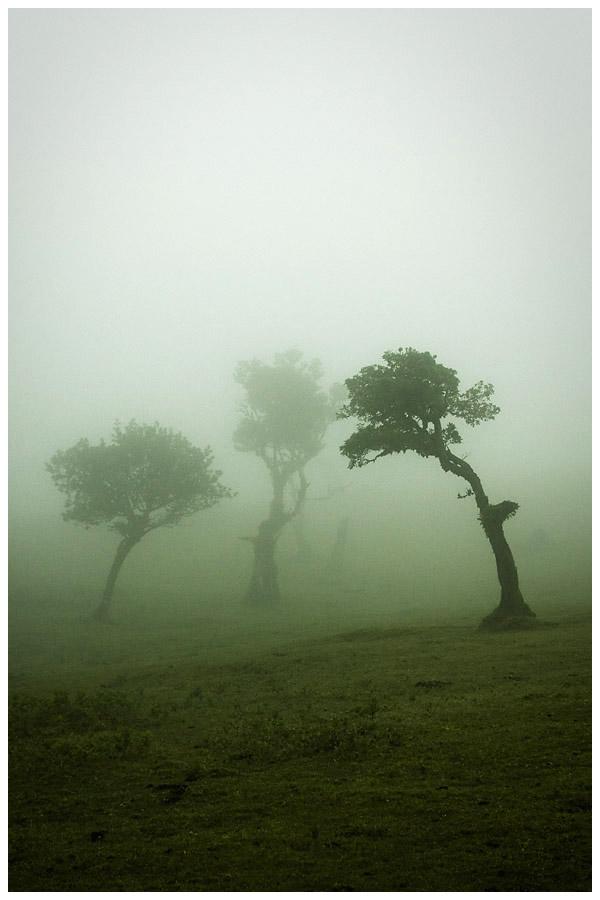 Madeira - Fanal 1 by damnengine