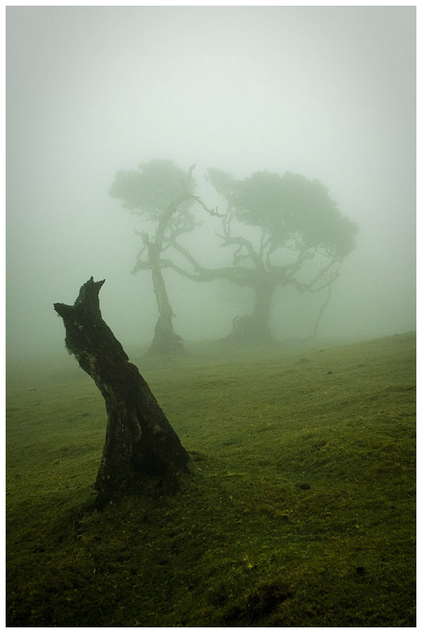 Madeira - Fanal 2 by damnengine