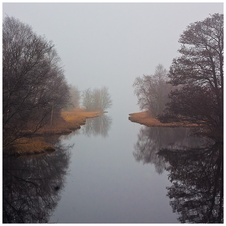 Fog Amsterdam Forest 1 by damnengine