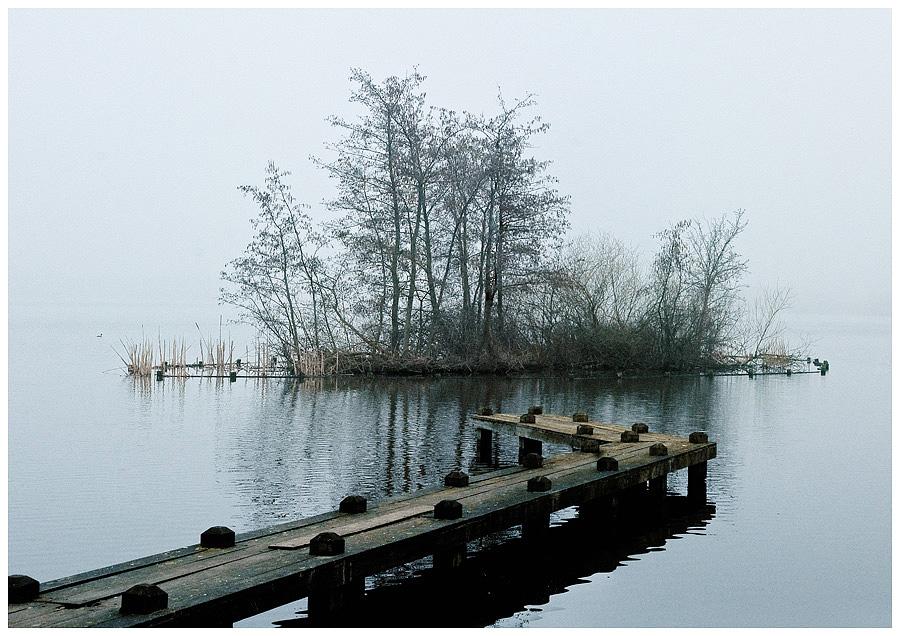 Fog Amsterdam Forest 2 by damnengine