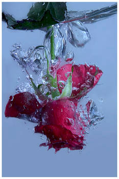 drowning rose II