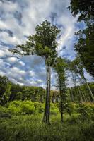 Forest by waldemarski