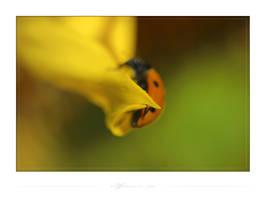 Yellow nature IV by waldemarski