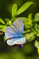 Bluebutterfly by waldemarski