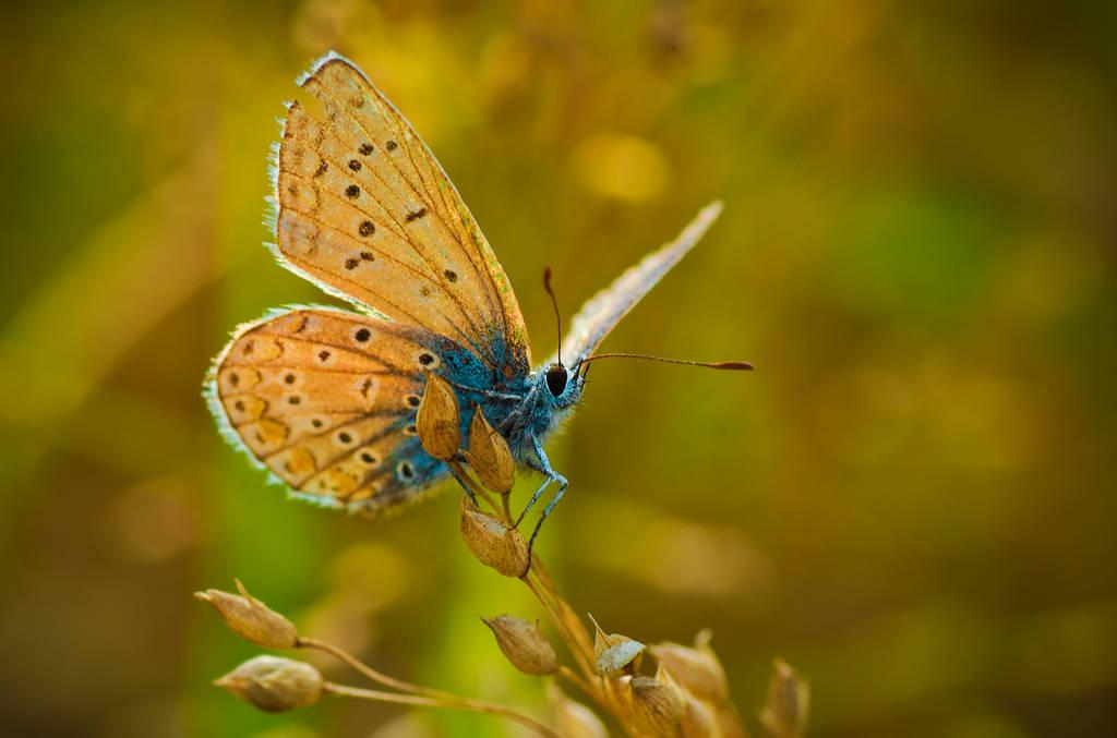 Baby Butterfly by waldemarski