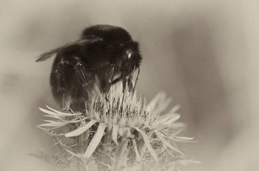 Bumblebee by waldemarski