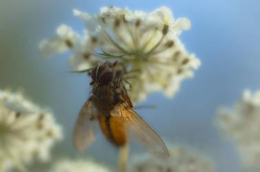 Fly by waldemarski