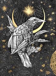 Birdy by Cg2