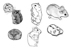 hamster drawings by pickahu