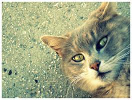 My Kitty by ayesi