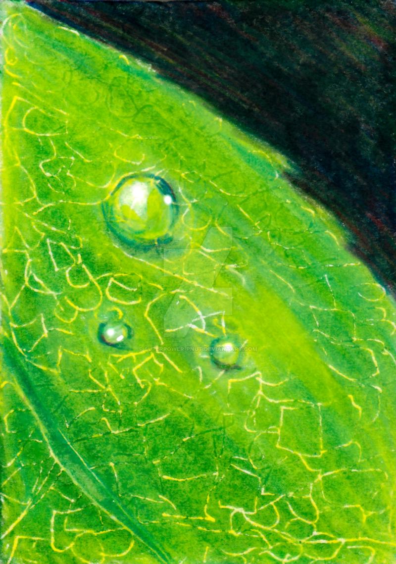 Dewdrop Practice No.3 by superpower-pnut