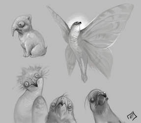 weird birbs and something cute