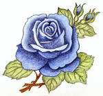 Melancholy Blue Rose