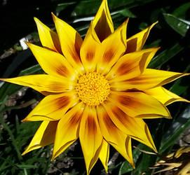 The Heart of the Sun
