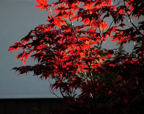 Burning Leaves III