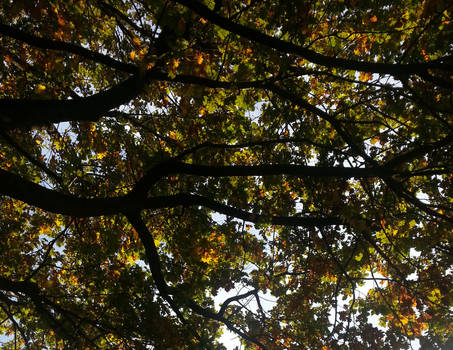 The Ley Lines of Autumn I
