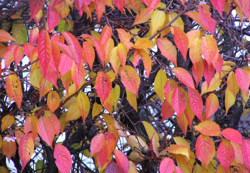 The Leylines of Autumn II