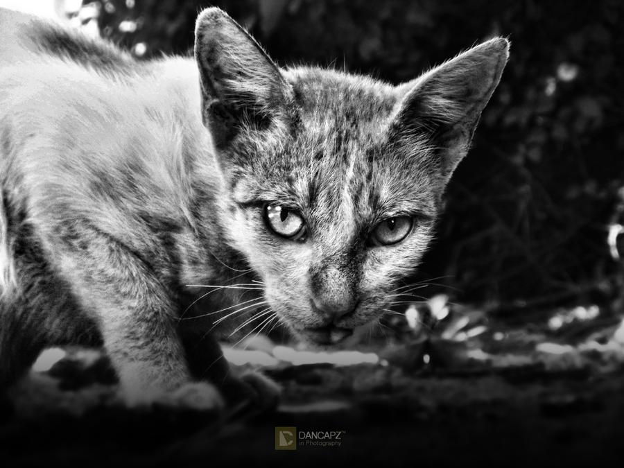 evil cat by dancapz