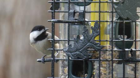 bird pic by flyinggumm