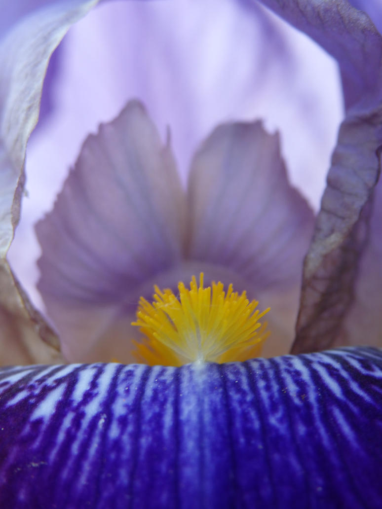 Iris 2 by tinuvielluthien