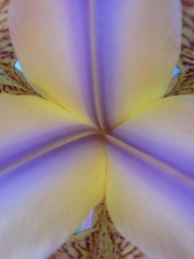 Flower Magic 2 by tinuvielluthien