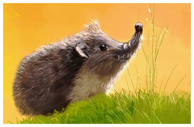 Hedgehog or dreams of spring