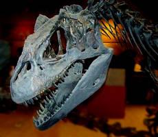 Allosaurus skull by Rhabwar-Troll-stock