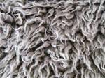 Curly Fur 1