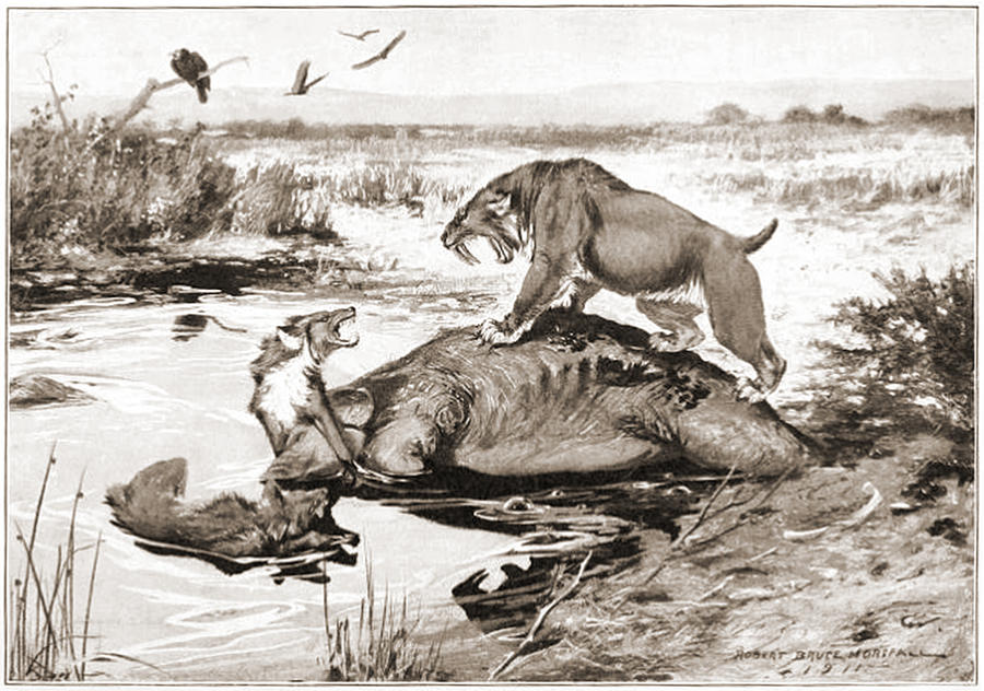 Dire wolf vs wolf - photo#13