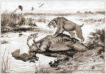 Smilodon versus Dire Wolf