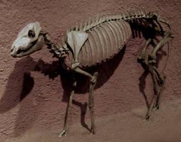 Prehistoric Pony by Rhabwar-Troll-stock