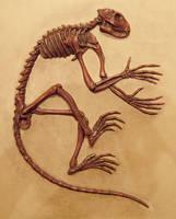 Ancient Lemur Smilodectes by Rhabwar-Troll-stock