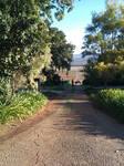 Vineyard Path stock