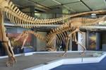 Suchomimus stock by Rhabwar-Troll-stock