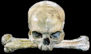 Hungry Human Skull Stock