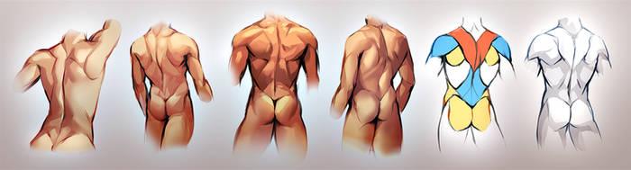 Male Back Study by Kawiku