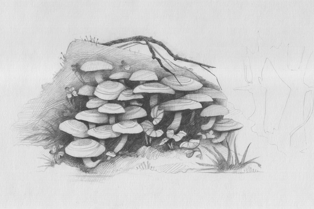 Mushrooms by Irkis