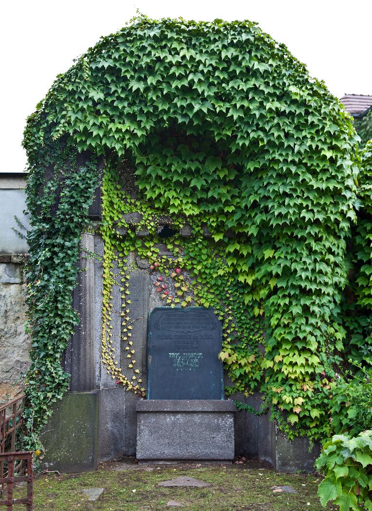 ivy by LilifIlane