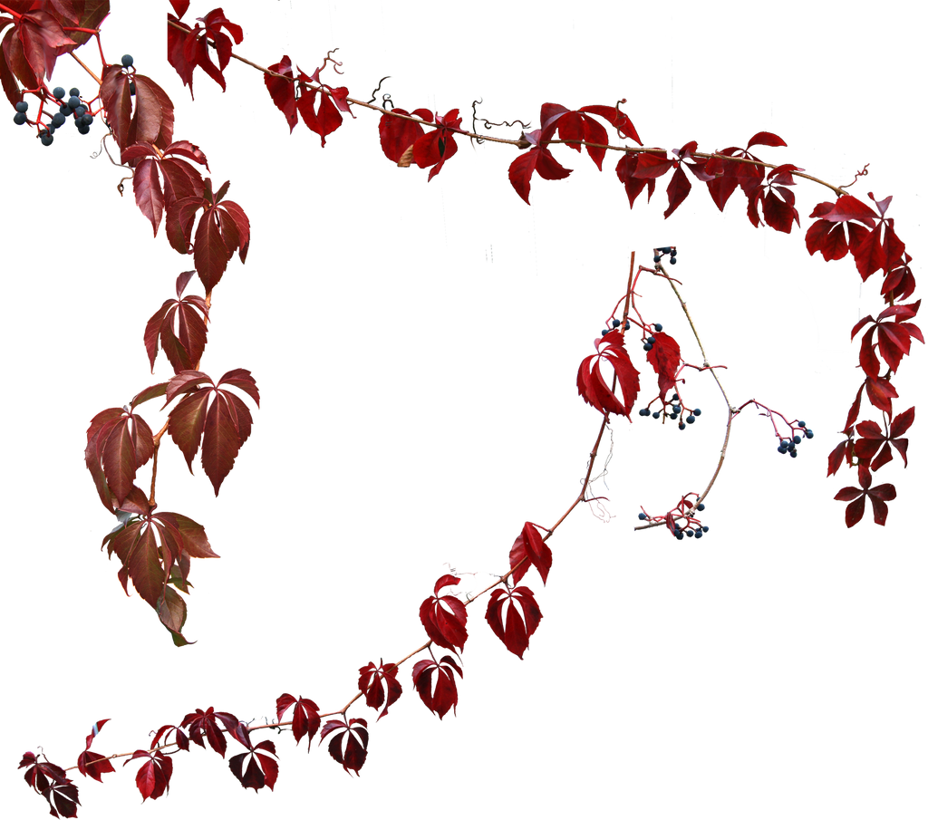 ivy in autumn by LilifIlane