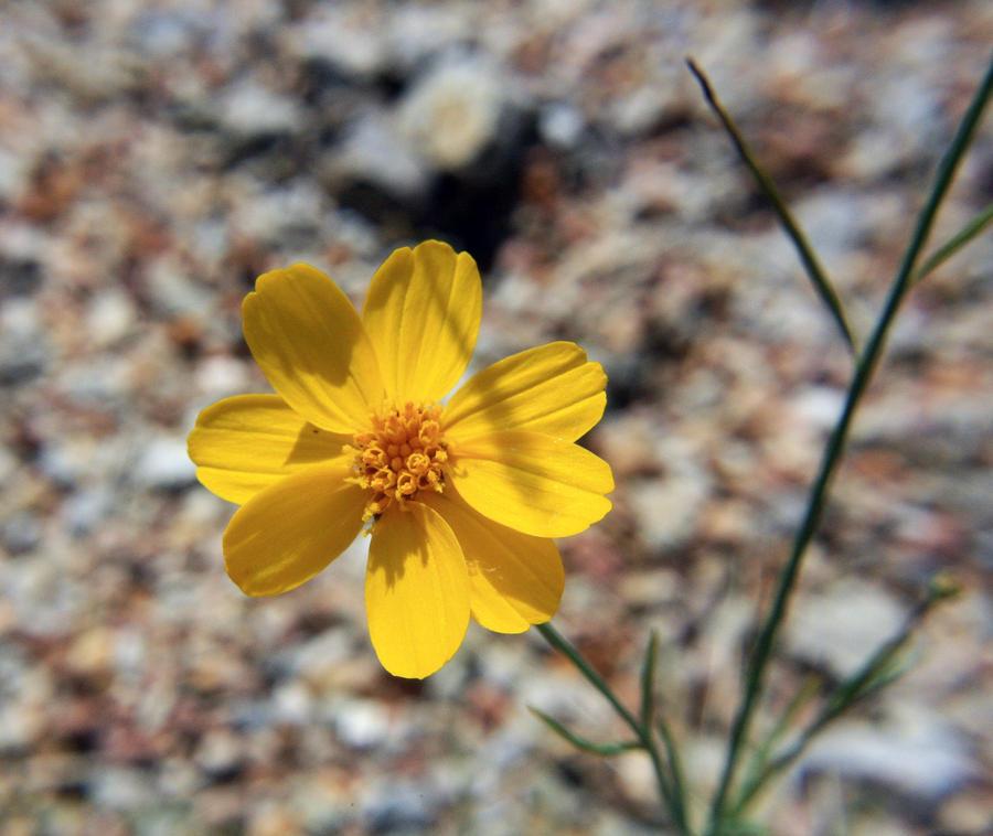 Yellowness by Kilamija