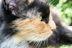 Kilamija's Profile Picture