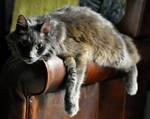 Spike, Monorail Kitty