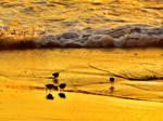 Little Birdies in the Surf by MotorCrazy