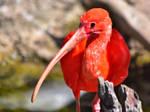 Orange Bird Closeup