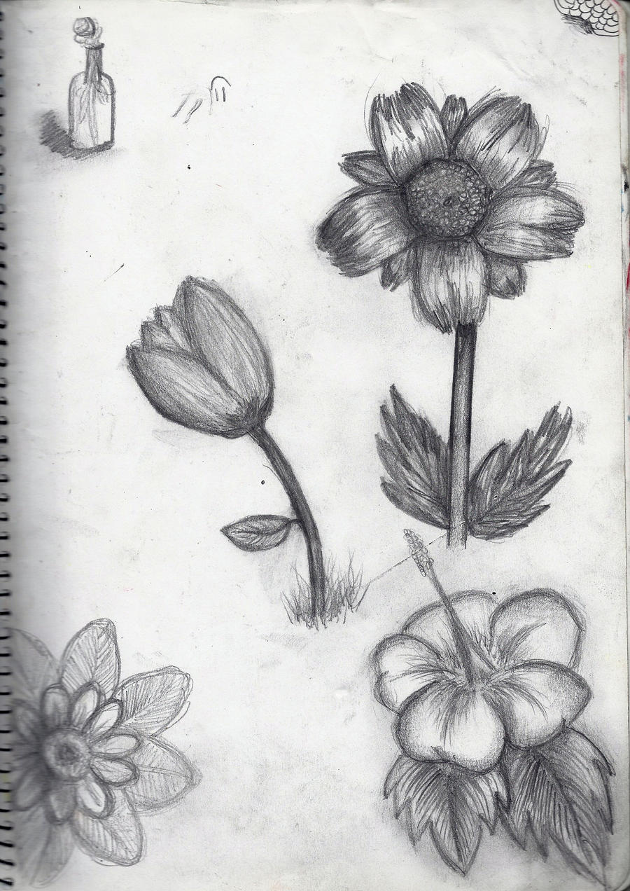 Range of Flower Sketches by MadhuM93