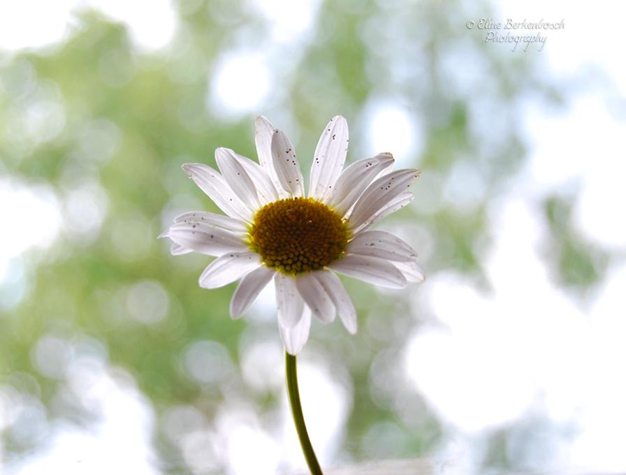 Simplicity by xOronar