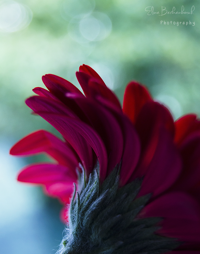 Flowerly Love by xOronar